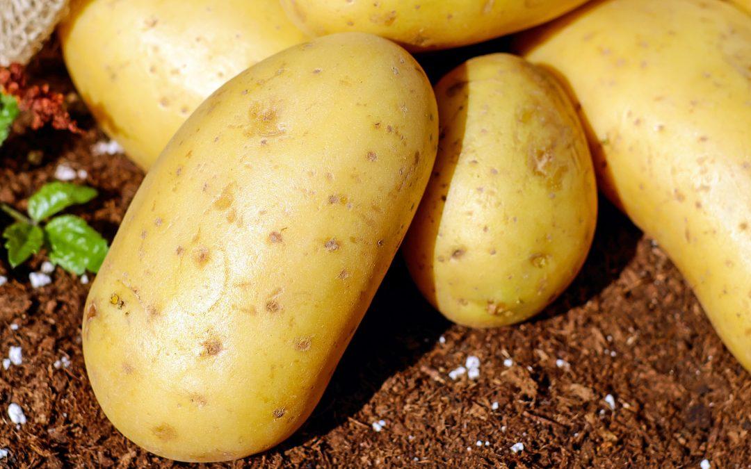 Plantacións de Pataca
