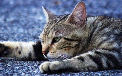 Control de Colonias Felinas